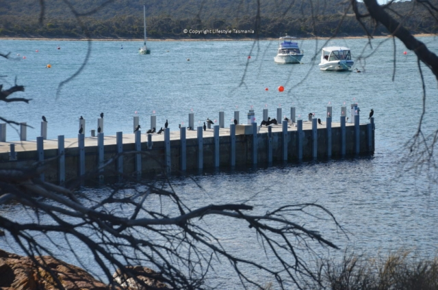 fishing coles bay jetty freycinet national park